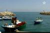 ميناء سيدي حْسَاين وسمكة الشَّارغُــو