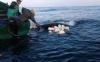 غرق قارب للمهاجرين السريين على متنه 15 شخصا قرب الحسيمة