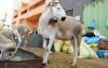 وزارة الاوقاف : فاتح شتنبر اول ايام عيد الاضحى بالمغرب