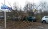 فيديو.. عاصفة مصحوبة برياح عاتية تصيب هولندا بالشلل