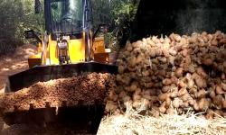 اتلاف 136 طن من البطاطس الملوثة وإحالة المعنيين على القضاء