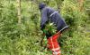 """البرلمان الهولندي يوافق على قانون يسمح بزراعة """"الكيف"""""""