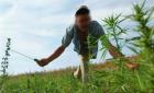 ابتدائية تارجسيت تدين مزارعا للكيف بالسجن النافذ