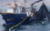 مهنيو الصيد بالحسيمة يطالبون بتعميم الشباك المضاد لهجمات النيكرو
