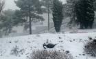 الثلوج تغطي مرتفعات اقليم الحسيمة (صور)