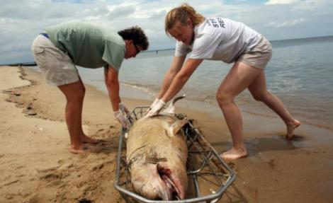 """""""قتل"""" الدلافين في سواحل الريف يستنفر منظمات عالمية"""