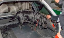 البحث عن ميكانيكي في الحسيمة دس 111 كلغ من الحشيش في سيارة مهاجرة ببلجيكا