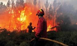 الناظور..السيطرة على حريق غابة غوروغو الذي أتى على 352 هكتار