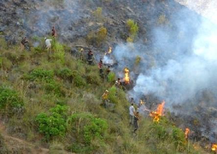 السيطرة على حريق شب في غابة قرب الحسيمة