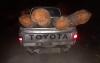 الحسيمة.. عصابات تواصل الاجهاز على اشجار الارز بمنطقة اساكن