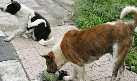 سلطات الناظور تعدم العشرات من الكلاب الضالة بعد ظهور داء الكلب في مليلية