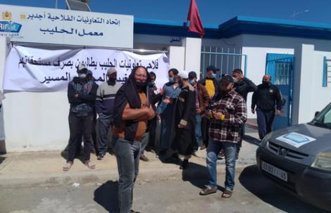 منتجو الحليب يهددون بالنزول للاحتجاج رفقة مواشيهم ضد ادارة معمل الحليب بامزورن