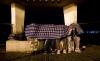 القاصر المغربي الذي بحثت سلطات مليلية عن عائلته يفارق الحياة