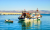 اخنوش يعلن عن خلق آلاف فرص العمل في مجال الصيد البحري بجهة الشمال