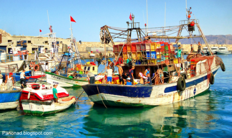توضيح مسؤولي قطاع الصيد بخصوص مراكب الصيد القادمة للحسيمة