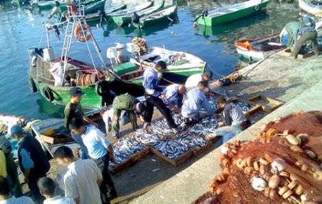 اسماك ممنوعة من الصيد تباع في ميناء الحسيمة