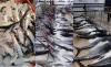 مطالب بإحداث وحدات لتصبير السمك بالحسيمة بسبب الوفرة في الانتاج