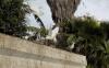 النوارس تغزو شوارع مدينة الحسيمة وجمعية تطالب العامل بالتدخل