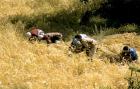 اقليم الحسيمة يتوفر على اكبر مساحة صالحة للزراعة بالجهة