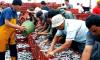 مندوبية الصيد البحري تتراجع عن قرار ادى الى ارتفاع اسعار الاسماك بالحسيمة