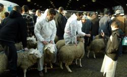 بلجيكا تحظر رسمياً الذبيحة على الطريقة الاسلامية دون تخدير