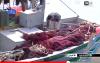 الدلافين تهاجم مراكب الصيادين بالحسيمة