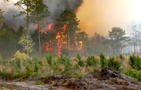الوجه الآخر لحرائق الغابات في الريف
