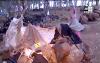 غابة كوروكو بعد تفكيك مخيمات المهاجرين