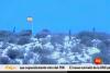 تدفق المهاجرين على صخور اصفيحة بعيون إسبانية